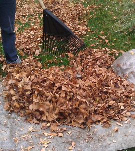Photo of raking leaves onto landscape fabric